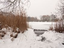 Frozen lake surface winter snow trees reeds water Stock Photography
