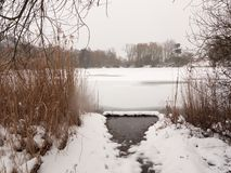 Frozen lake surface winter snow trees reeds water Stock Image