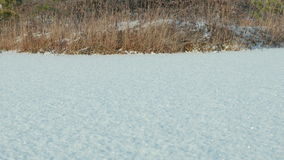 Frozen lake under the snow. Clean and frosty daytime. Smooth dolly shot.  stock video footage