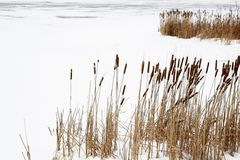 Frozen lake view Stock Photography