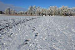 Frozen lake in winter, Mazury, Poland Royalty Free Stock Photo