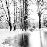 Frozen lake in a winter park Stock Photography