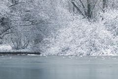 Frozen lake in winter, Winter lake scene. Nature stock images