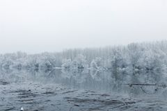 Frozen lake in winter, Winter lake scene reflecting in the water. Nature royalty free stock photo