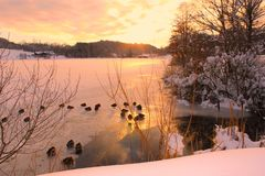 Frozen lake. A frozen lake in winter at sunset with lot of ducks , in France Stock Image