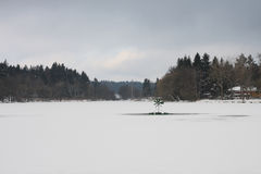 Frozen lake in winter Royalty Free Stock Photos