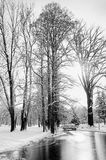 Frozen lake in a wintry park Royalty Free Stock Photography