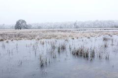 Frozen lakes and lonely tree on leersumseveld in winter Stock Images