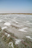 Frozen land. Stock Images