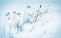 Frozen land Royalty Free Stock Images