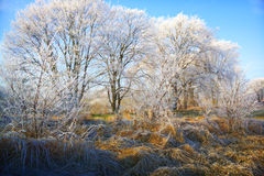 Frozen landscape Stock Photo