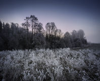 Frozen landscape Stock Photography