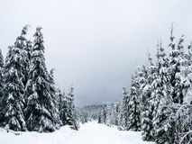 Frozen landscape in the Black Forest stock images
