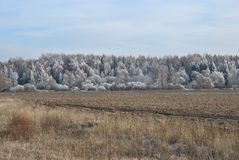 Frozen landscape: forest covered with frost. Dreamy landscape on a frosty winter day, countryside,  Russia Stock Photo