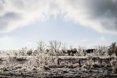 Frozen Landscape After an Ice Storm Royalty Free Stock Images