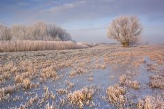 Frozen landscape in The Netherlands in early morning Royalty Free Stock Photography