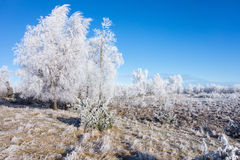 Frozen landscape Royalty Free Stock Image