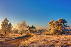 Frozen landscape in the morning light royalty free stock photos