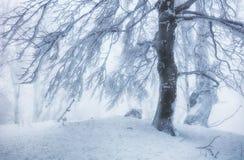 Frozen landscape - Winter mist forest Royalty Free Stock Photos