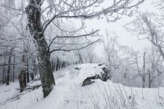 Frozen landscape - Winter mist forest Stock Photos