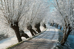 Frozen lane with hoarfrost Stock Image