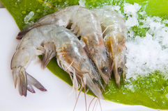 Frozen large shrimps Royalty Free Stock Images