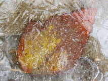 The frozen leaf Royalty Free Stock Photos