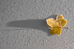 Free Frozen Leaf Stock Images - 17828614