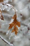 Frozen Leaf Stock Images