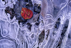 Frozen leaf Royalty Free Stock Images
