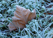 Frozen winter leaf Stock Photography