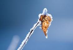 Free Frozen Leaf Royalty Free Stock Images - 3702959