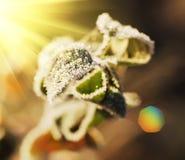 Frozen leaf Royalty Free Stock Image