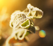 Frozen leaf Stock Photography