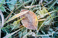 Frozen leaf Stock Images