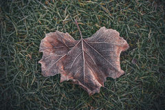 Frozen leaf with beautiful patterns Royalty Free Stock Image