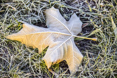 Frozen leaf Stock Photos