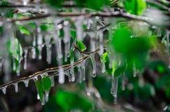 Frozen Leaf. We can saw a frozen on leaf in winter season Stock Photo