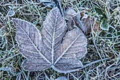 Frozen leaf Stock Image