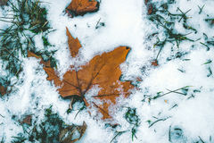 Frozen Leaf Covered with Snow. Laying on Ground Stock Image