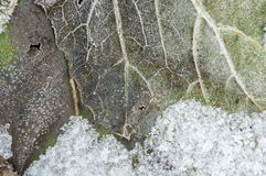 Frozen leaf with frost and ice Royalty Free Stock Image