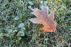 Frozen leaf in the garden Royalty Free Stock Image