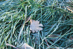 Frozen leaf. On the frozen grass Royalty Free Stock Image