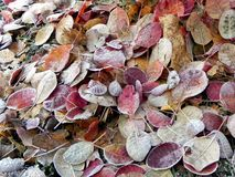 Frozen leaf ground Stock Images