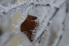 Frozen leaf heart. Ice frosted leaf in shape of a heart Royalty Free Stock Photo
