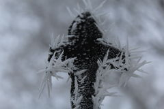 Frozen leaf heart. Ice frosted leaf in shape of a heart Stock Photography