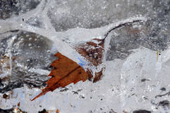 A frozen leaf Royalty Free Stock Photo