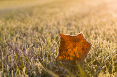 Frozen leaf on the morning grass Stock Photography
