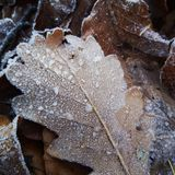 Frozen leaf with nice structure royalty free stock photos