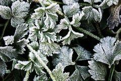Frozen leaf pattern Stock Images